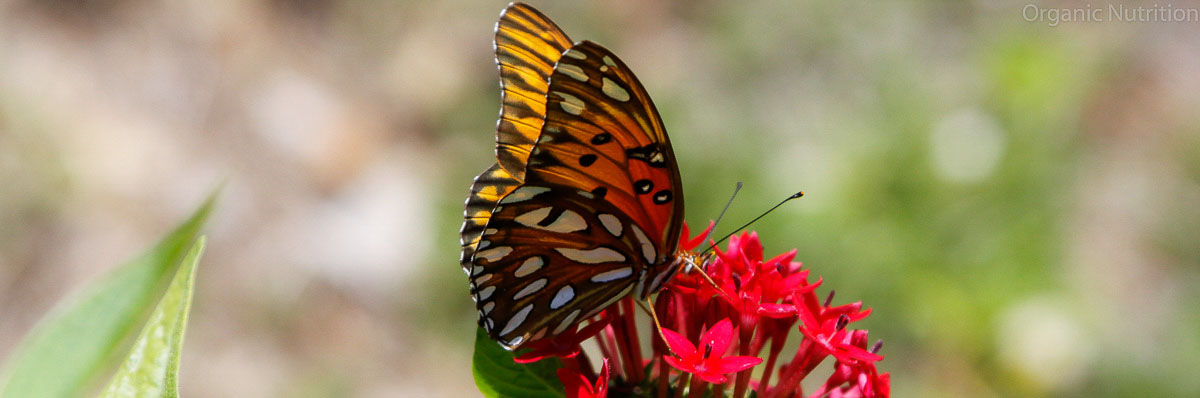 butterflies go through a change of life cycle