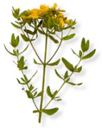 a research on st johns wort and its efficacy as a natural remedy for depression The use of alternative treatments--like acupuncture, homeopathy, herbs,  the  benefits and risks of these alternative treatments and research that is  support  the efficacy of st john's wort in the treatment of depression (bilia.